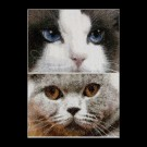 borduurpakket cats, smokey&blu